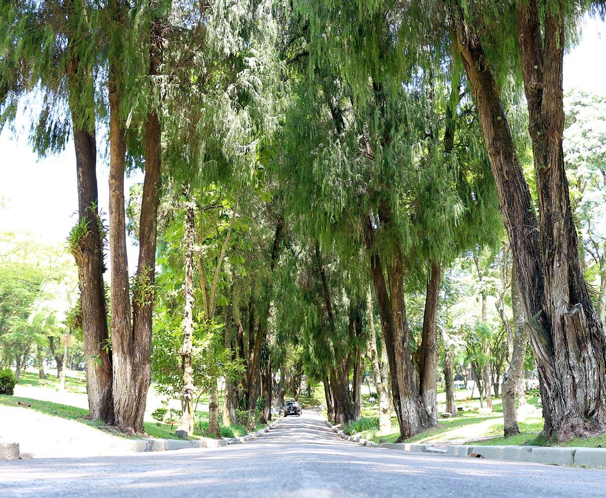 imagens ruas-gethsemani