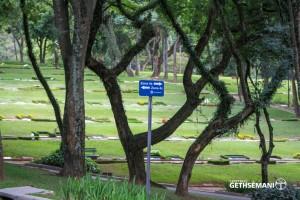 meio ambiente gethsemani árvores