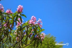 meio ambiente gethsemani quaresmeira