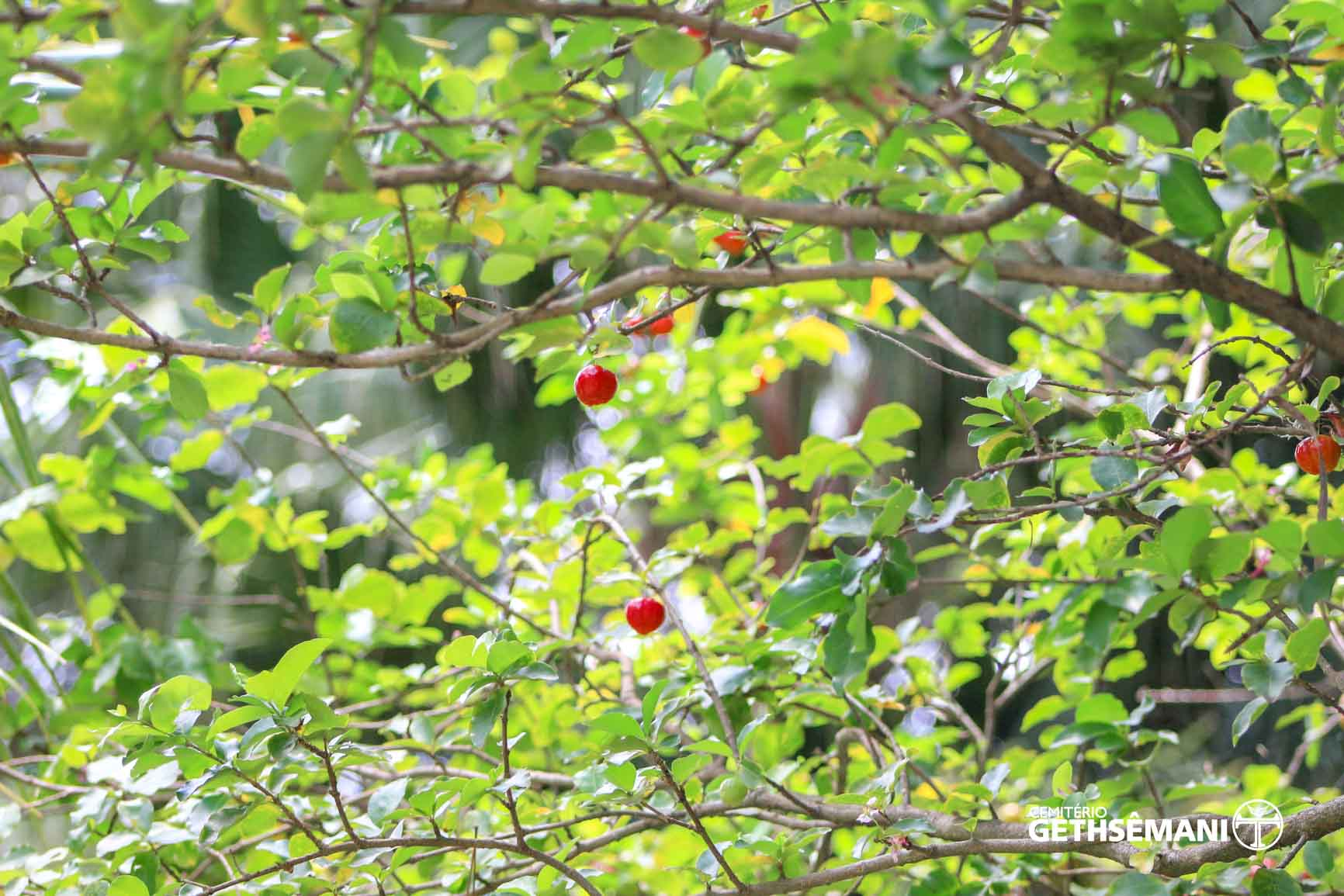 natureza-cemiterio-gethsemani (10)