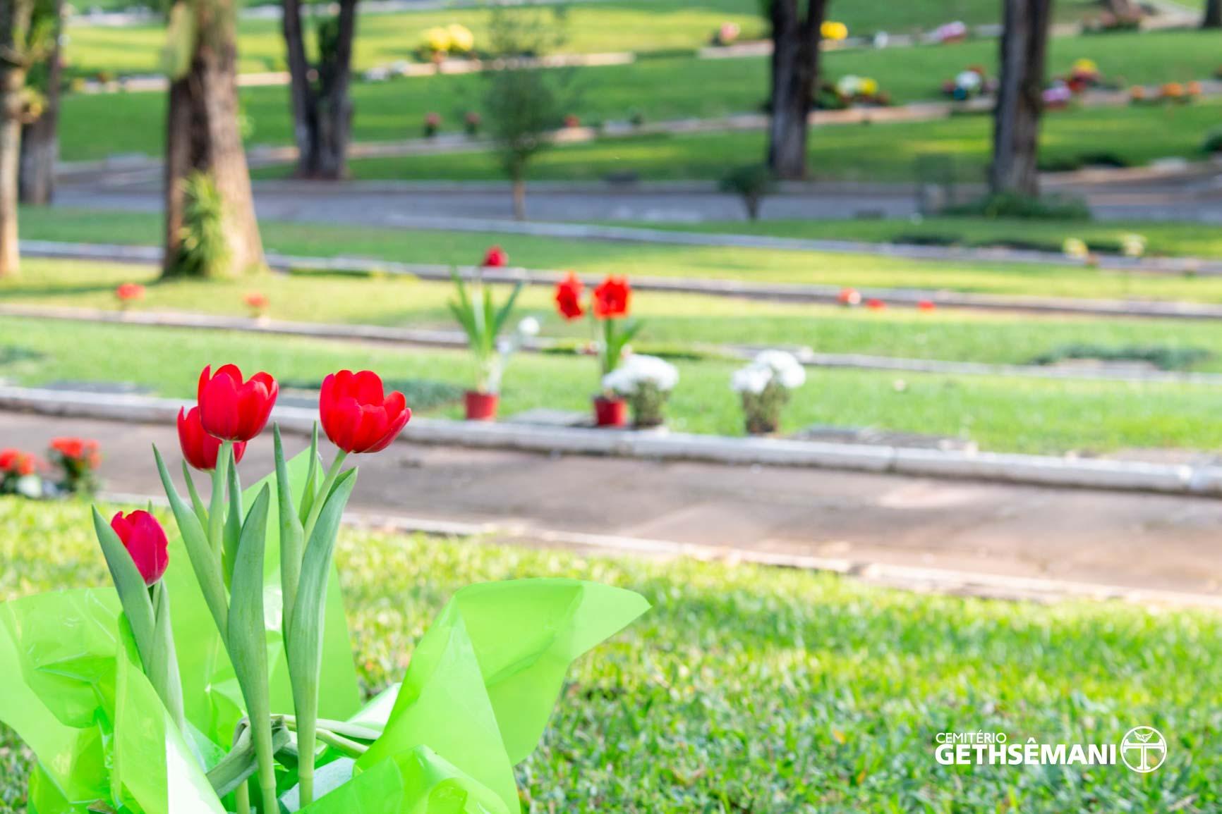 natureza-cemiterio-gethsemani (15)